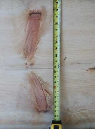 pine board with pruning mark visible in wood grain